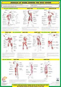 anatomy of a golf swing why golfing on a strained quad is detrimental to the