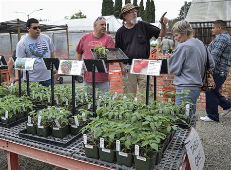 Gardening Department Fc Hosts The Annual Tomato Sale The Hornet