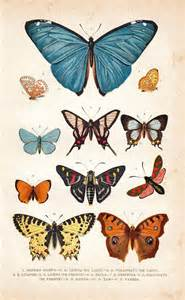 antique butterfly best 25 butterfly print ideas on vintage
