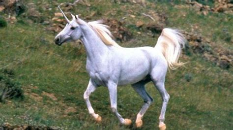 imagenes de unicornios de verdad 191 existieron los unicornios tkm argentina