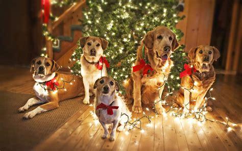 hd honden foto s bureaublad achtergronden