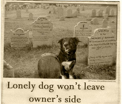 articles on dogs lonely news article by whisper on deviantart