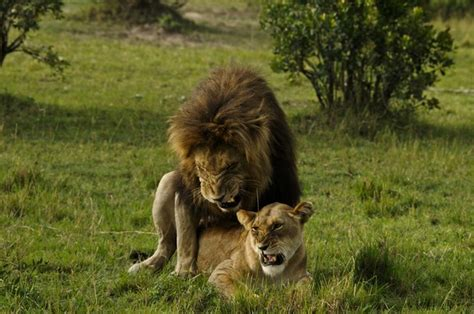 Animal Matting by Animals Mating B Just B Cause