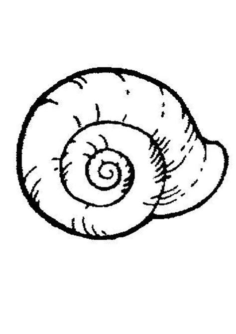 shell coloring pages sea snail coloring pages hellokids