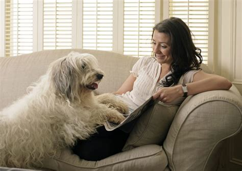 pseudopregnancy in dogs pseudopregnancy in dogs care the daily puppy