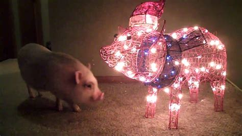 light up pig christmas decoration www indiepedia org