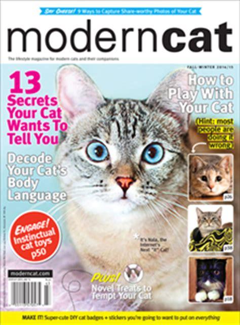 modern cat the next quot it quot cat modern cat