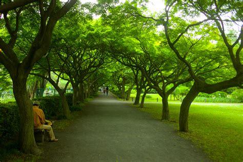 koishikawa botanical gardens park in tokyo
