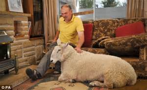 Woolly yarn about a 22 stone sheep who is kept as a family