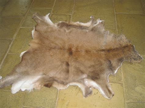 Deer Hide Rugs by Deer Skin Rug Www Imgkid The Image Kid Has It