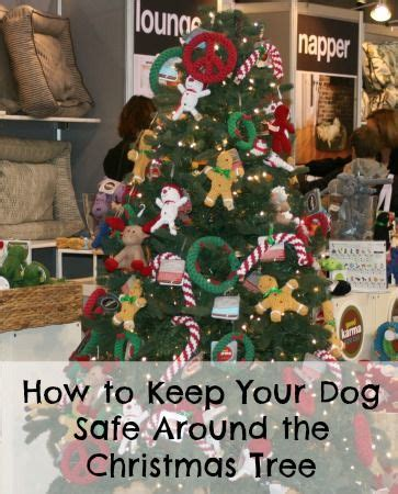 how to keep your dog safe around the christmas tree pet