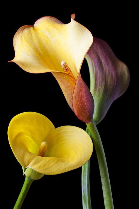 calla lilies on pinterest calla lily bouquet calla