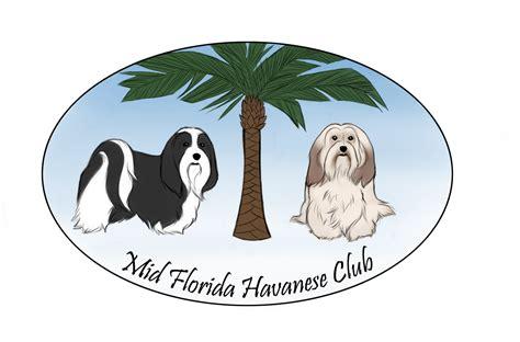havanese club mid florida havanese club specialty show