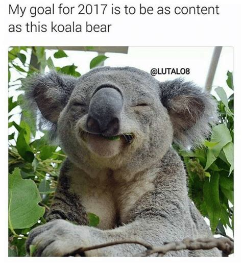 Angry Koala Meme - angry koala meme 28 images the bean trees quotes with