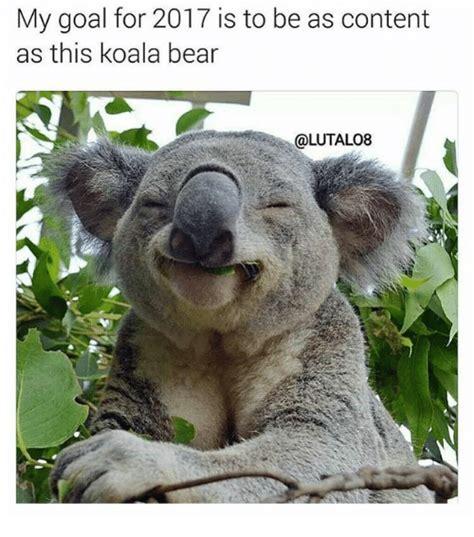 Angry Koala Meme - angry koala bear meme www imgkid com the image kid has it