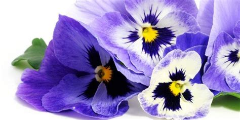 vasi fioriti fiori colorati in cassetta a febbraio cose di casa