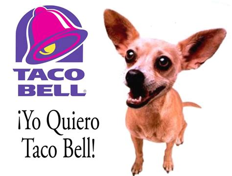 how to bell a puppy taco bell taco bell picture