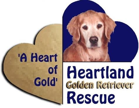golden retriever rescue tn heartland golden retriever rescue nonprofit in knoxville tn volunteer read reviews