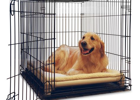 puppy bed in crate kuranda beds orthopedic and chew proof beds