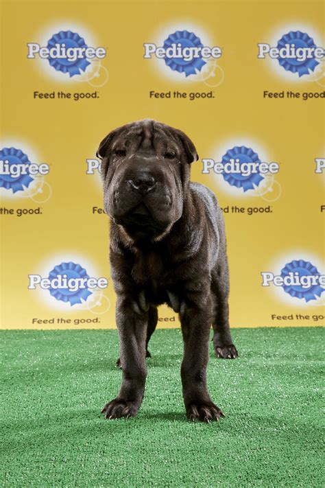 what time is puppy bowl 2017 puppy bowl 2017 live time tv schedule lineups and how to