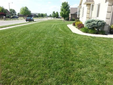 how often should you feed a how often should you feed landscaping contractor talk