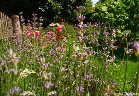 Garten Pflanzen Mai by Gartenarbeiten Im Mai Alles Neu Macht Der Mai Garten