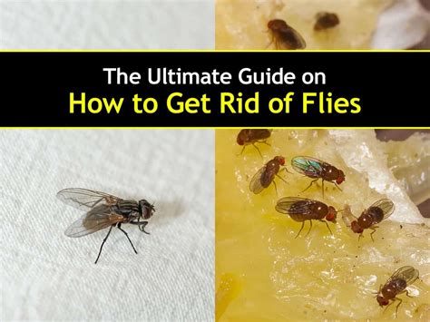 getting rid of flies in backyard how to get rid of bugs in backyard 28 images how can i