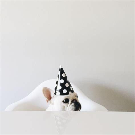 pug singing happy birthday 1000 ideas about happy birthday pug on pug pugs and pug