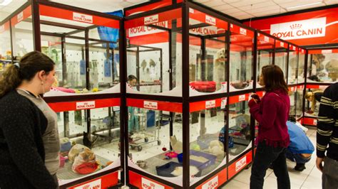 puppy stores in florida pet store images usseek