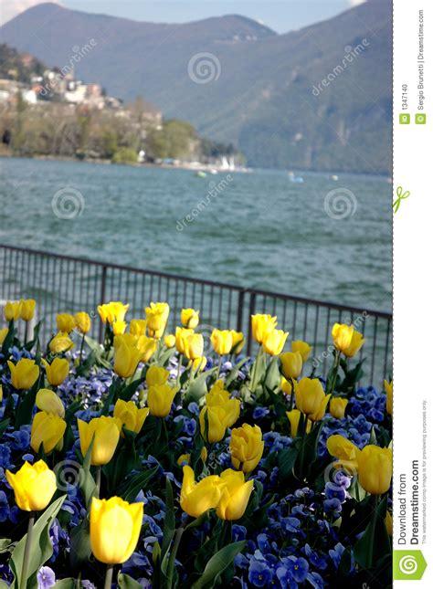 fiori lugano lugano fiori sul lago fotografia stock immagine 1347140