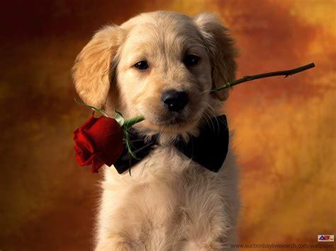 puppy valentines s day cait strides