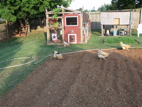 backyard homestead what the ladies and i have been up too more pics added