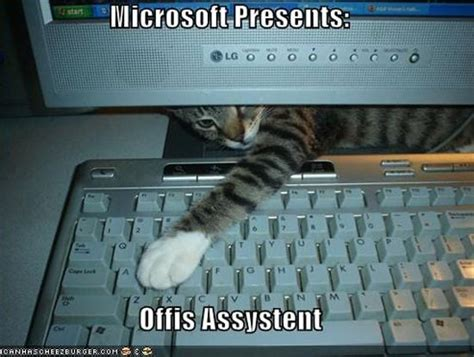 Office Cat Meme - cats and dogs playing with computers you know who wins
