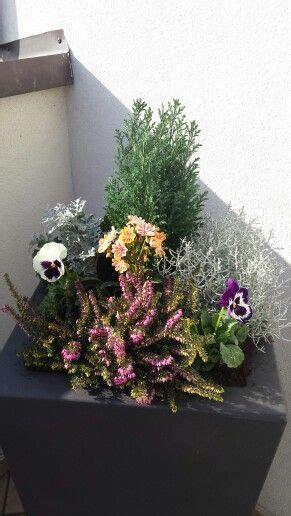 fioriere invernali oltre 1000 idee su piante invernali su