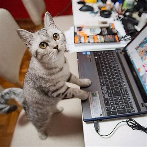 working at a standing desk cat working at a standing desk much healthier our