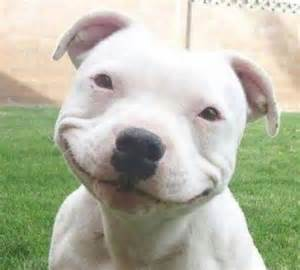 these 30 images prove that pit bulls are extremely vicious creatures especially 9