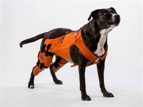 support harness harness for dogs arthritis harness get free image about wiring diagram