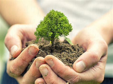 Christmas Tree by 6 Reasons To Plant Trees In Israel L The Symbol Of