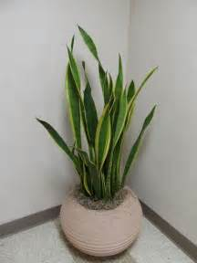 indoor house plants re potting indoor plants what grows there hugh conlon horticulturalist professor