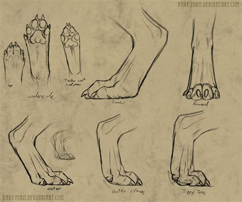 werewolf drawing tutorial werewolf paw reference by teknicolortiger on deviantart