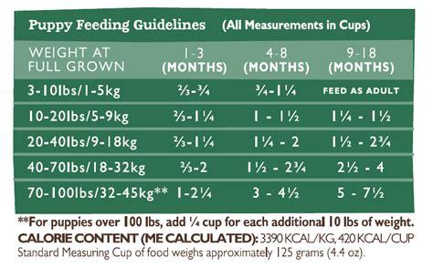 puppy schedule 8 weeks puppy feeding schedule 8 months photo