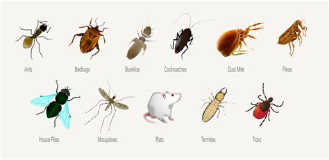 bed bugs vs fleas fleas vs lice pictures to pin on pinterest pinsdaddy
