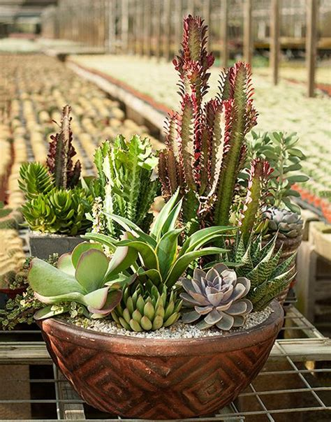 desert container gardening 17 best ideas about cacti and succulents on