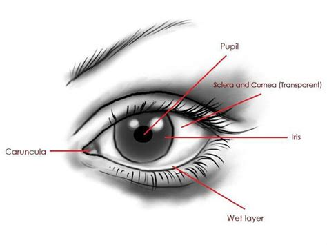 outer eye diagram creating a eye with 3ds max by korosh