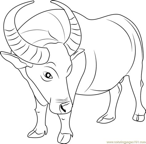 cape buffalo coloring pages coloring pages