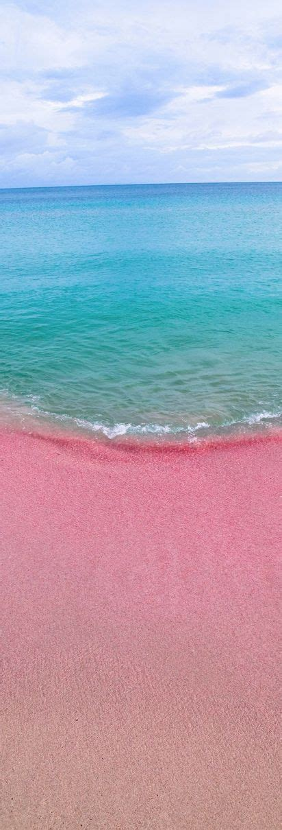 pink sand beach beautiful pink sand and bermudas on pinterest