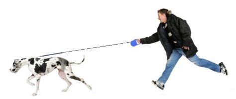 stop from pulling on leash teach your 100 words respect program for dogs