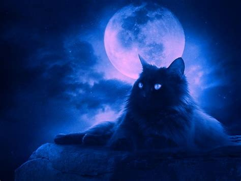 wallpaper cat night cat in the night cats animals background wallpapers on
