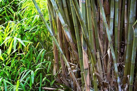 Insert Ecobum Birdy insert bamboo ecobum
