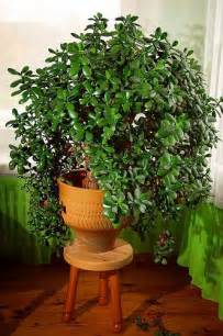 Easy Houseplants 10 Easy Houseplants To Grow Plants I Always Think Of
